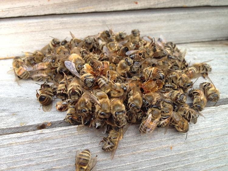 Народные средства при простатите пчелиный подмор велотренажер против простатита