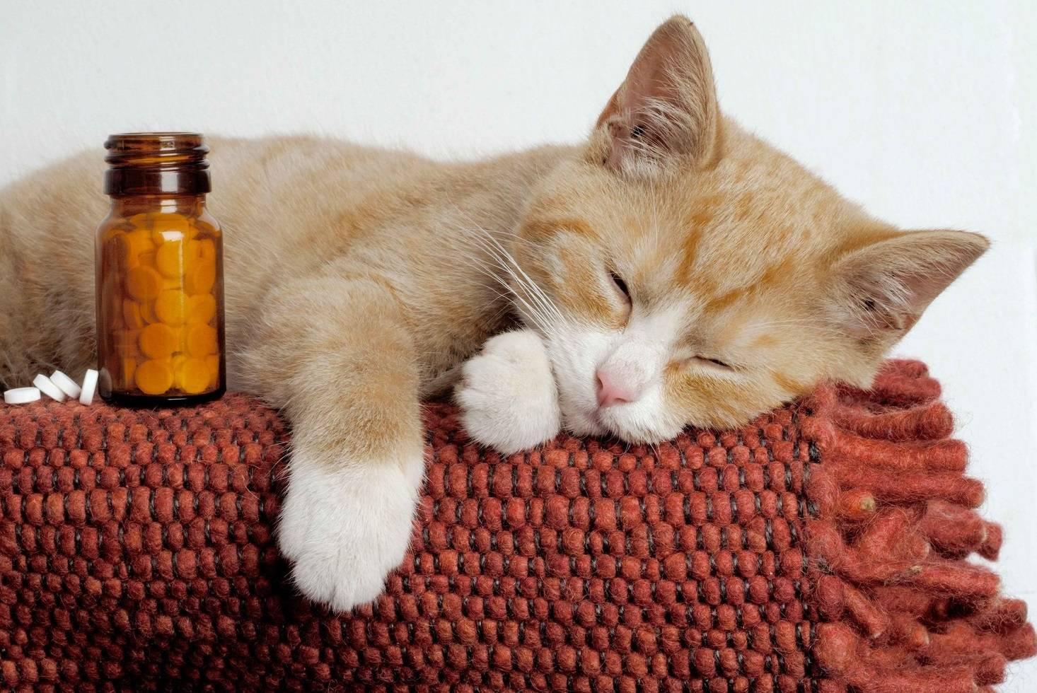 котик приболел картинки миниатюрная брюнетка